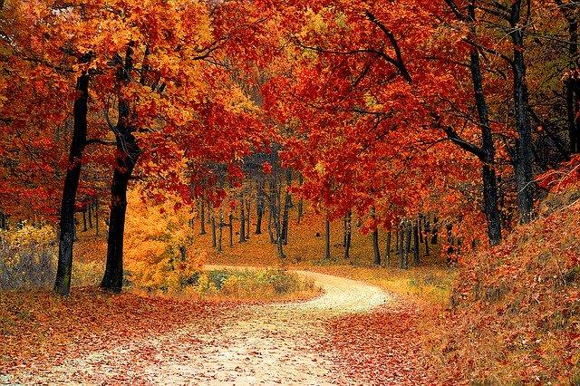 Nouvelles sanctions administratives en matière d'élagage et d'entretien des arbres et des haies donnant sur la voie publique
