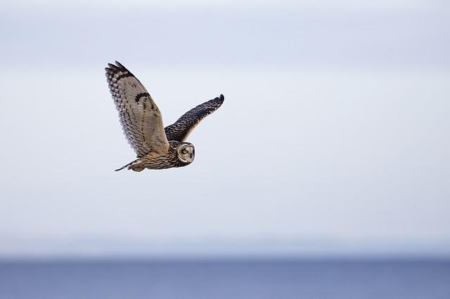 Liste des espèces animales et végétales à la protection desquelles il ne peut être dérogé qu'après avis du Conseil national de la protection de la nature
