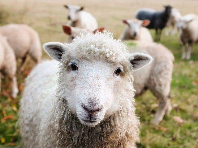 Référendum d'initiative partagée pour les animaux