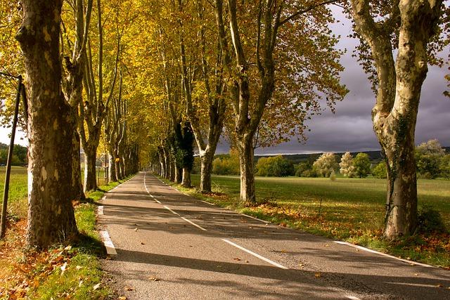 L'autorisation d'urbanisme vaut dérogation à l'interdiction d'abattre les arbres en bordure de voie